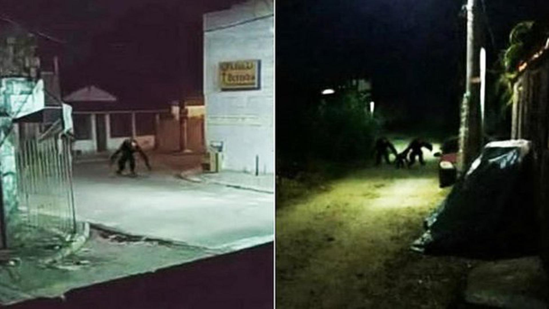 Criatura estranha circula pelas ruas durante a noite