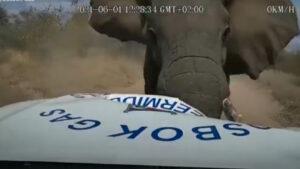 Vídeo: Elefante esmaga caminhão como se fosse de brinquedo