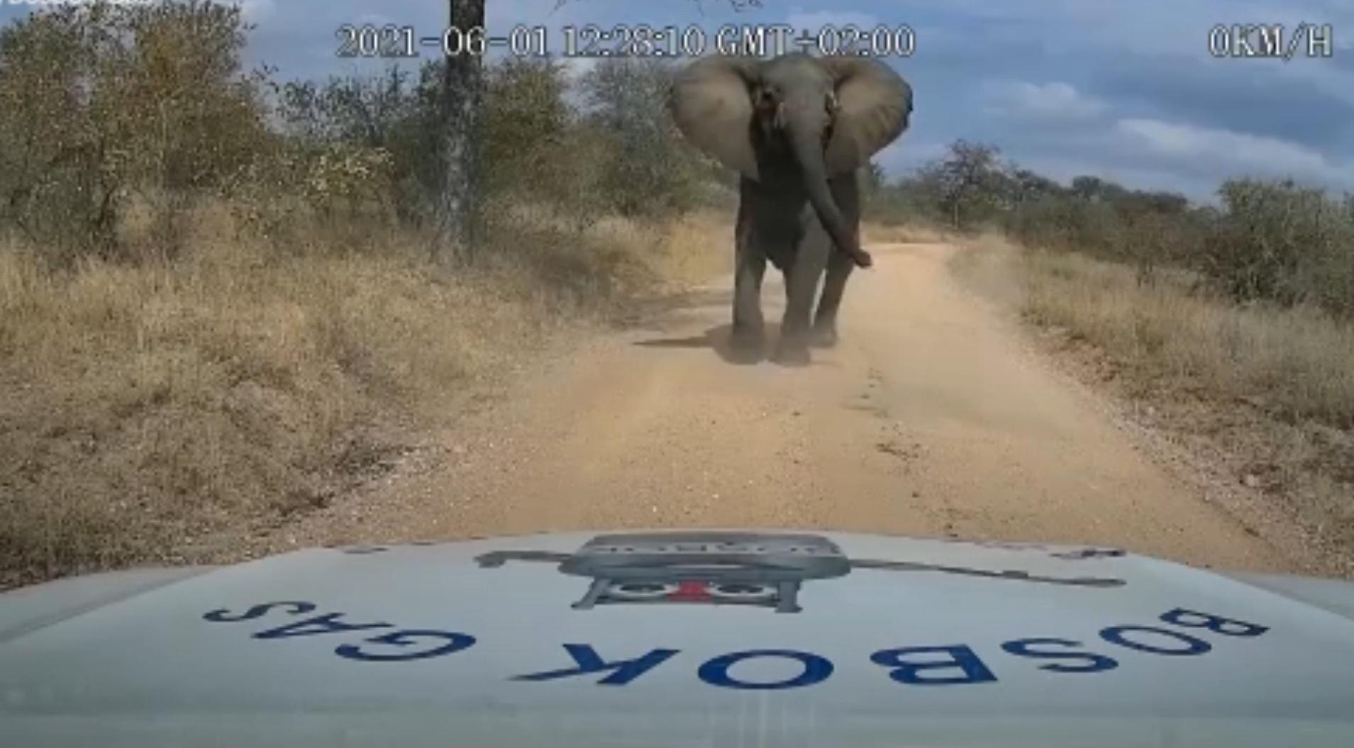 Elefante esmaga carro