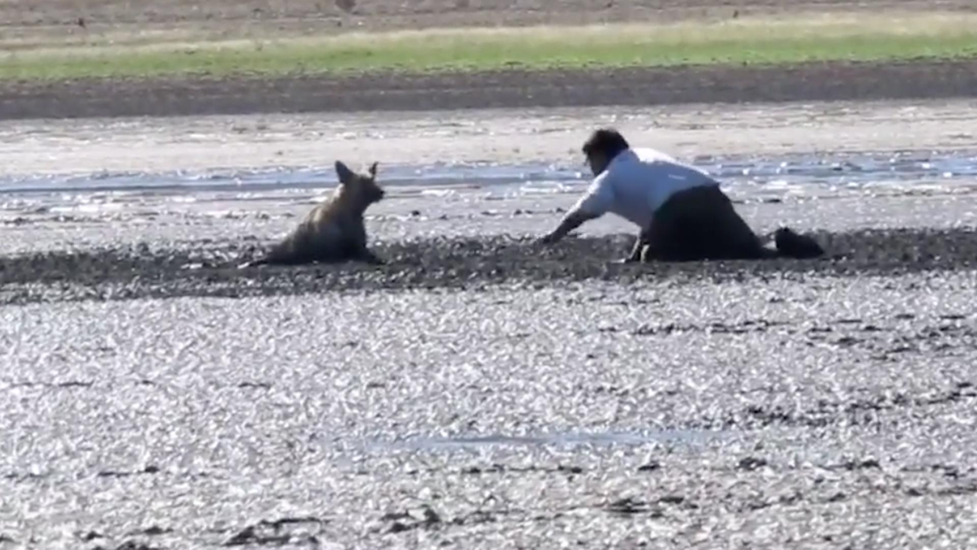 Vídeo: Homem salva cachorro preso na lama e cercado de urubus