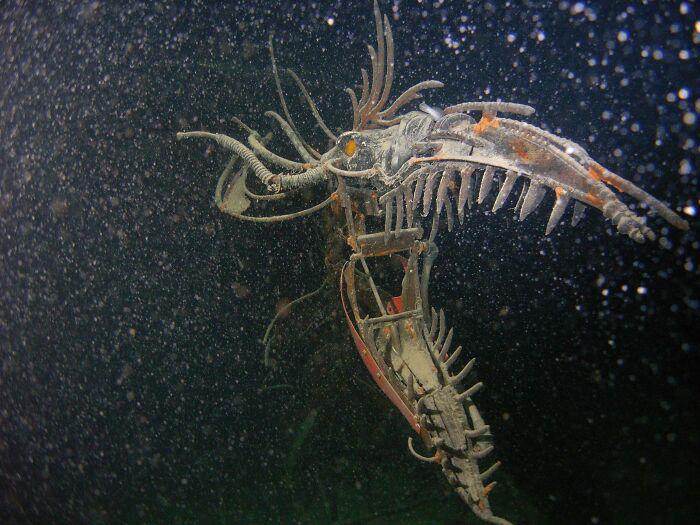 Medo de objetos submersos 6