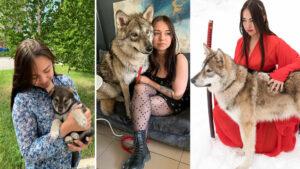 Mulher adota filhote de lobo em abrigo, pois ele não sobreviveria na natureza