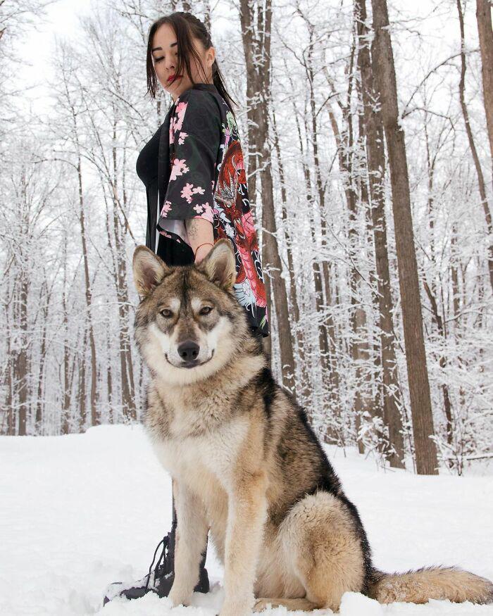 Mulher adota filhote de lobo melhor amigo