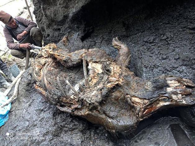 Rinoceronte de 20 mil anos foi encontrado congelado