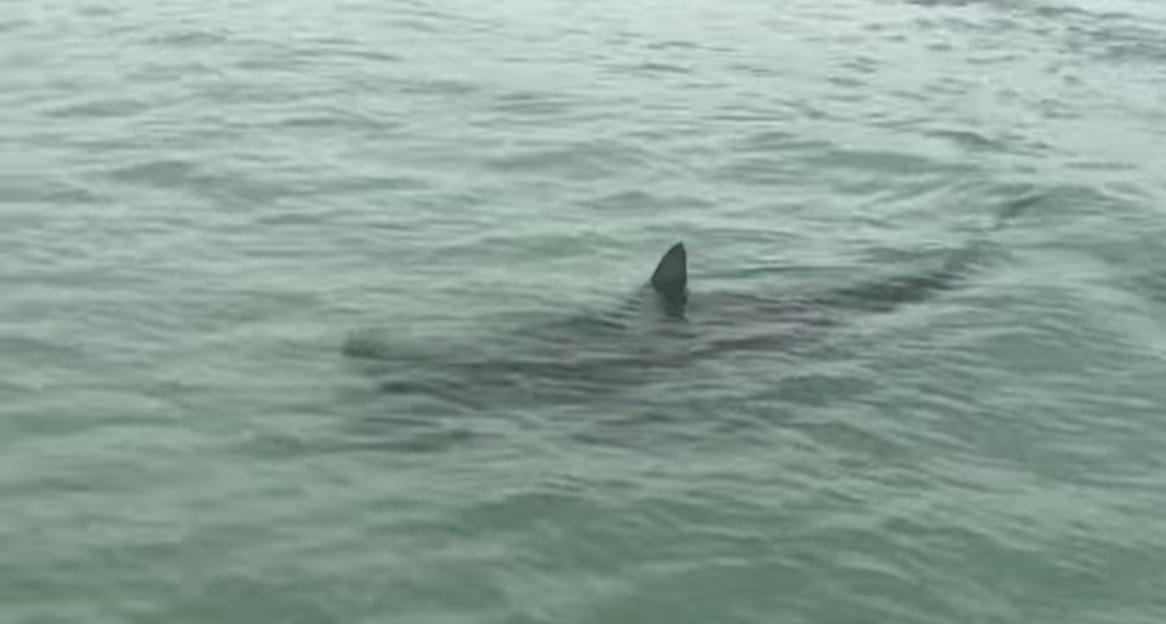 Tubarões aparecem do nada quando banhistas estão relaxando no mar