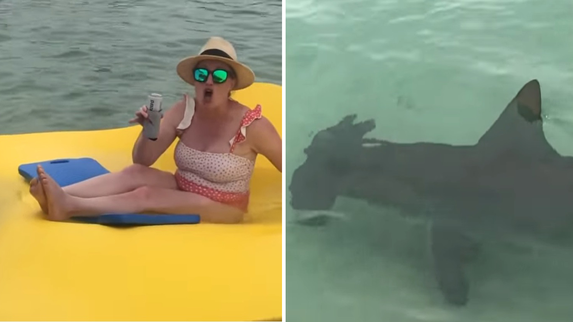 Tubarões aparecem do nada
