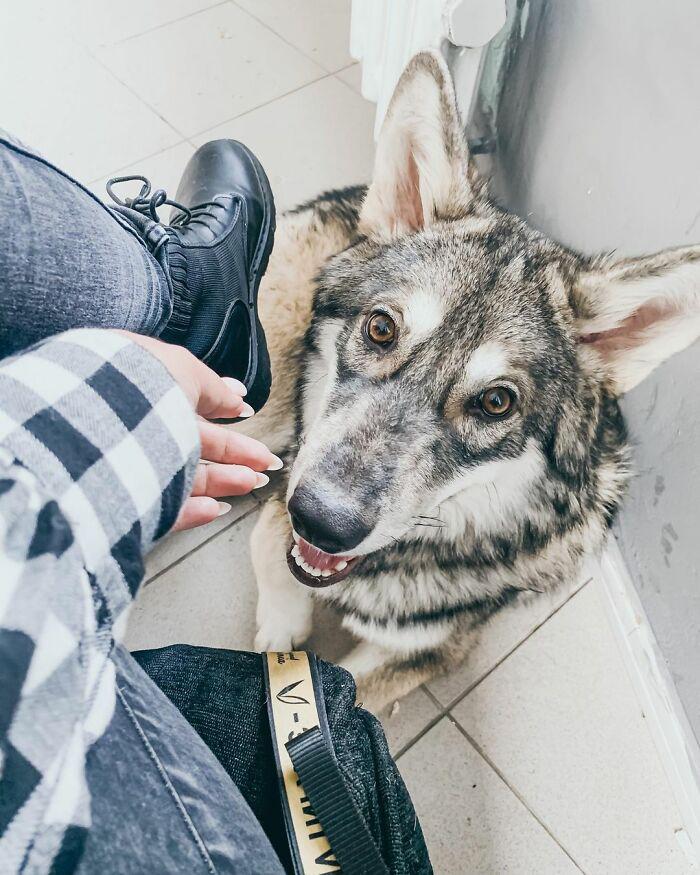 mulher adotou um lobo