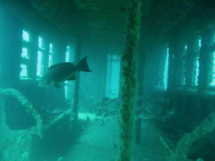 vagão de metrô submerso