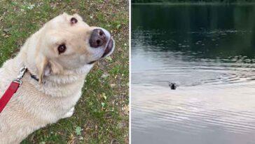 Cachorro atravessa um lago