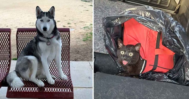 Cachorro encontra uma bolsa