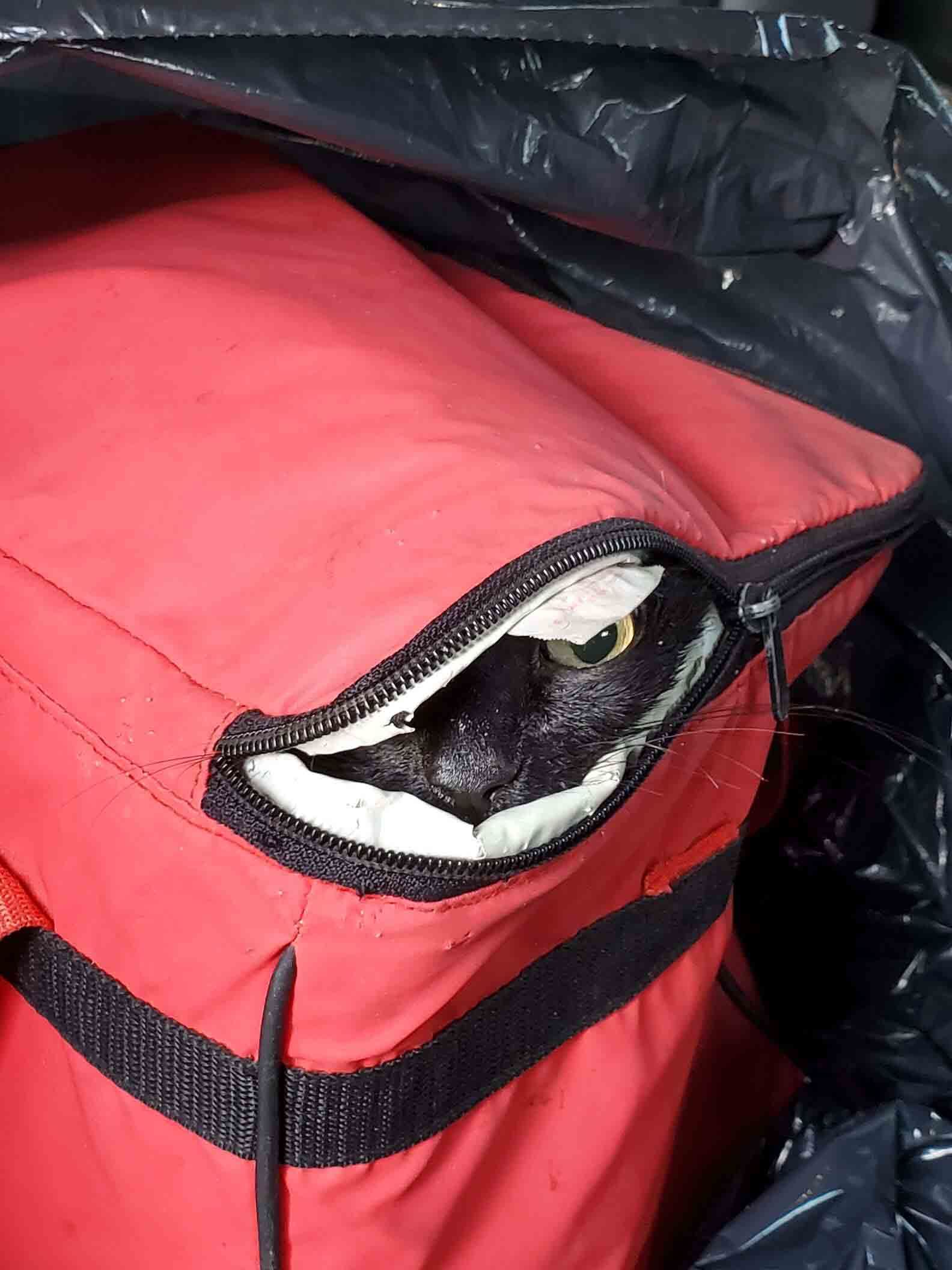 Cachorro encontra uma bolsa térmica com um gato dentro