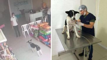 Cachorro ferido vai a clínica veterinária