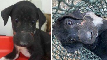 Cachorro filhote foi salvo