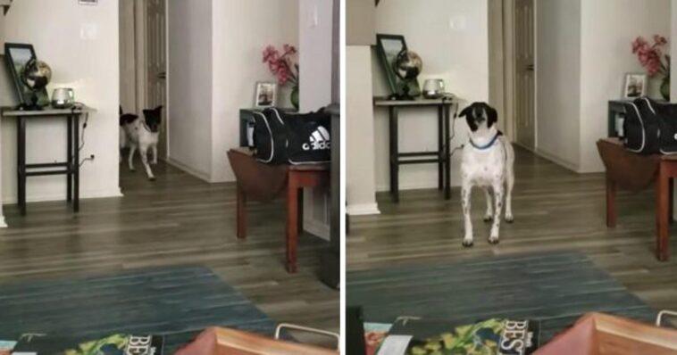 Cachorro não resiste e sempre aparece