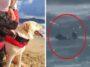 Cães salva-vidas resgataram adolescente se afogando no mar