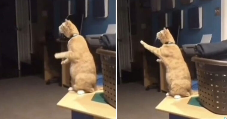 Gato se despede de de amigo cão após morte