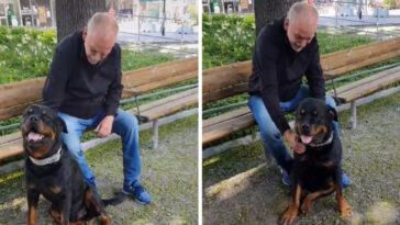 Rottweiler confortaestranho