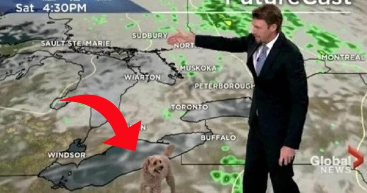 Cachorro de jornalista invade previsão do tempo