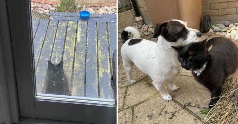 Gatinho bate à porta para chamar cachorro