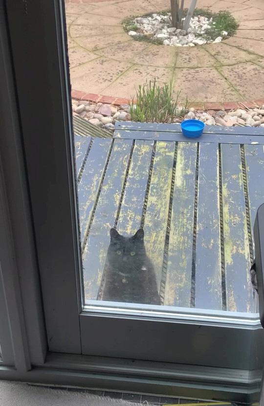 Gatinho bate à porta para chamar o melhor amigo
