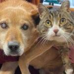 Cachorro cego e seu gato