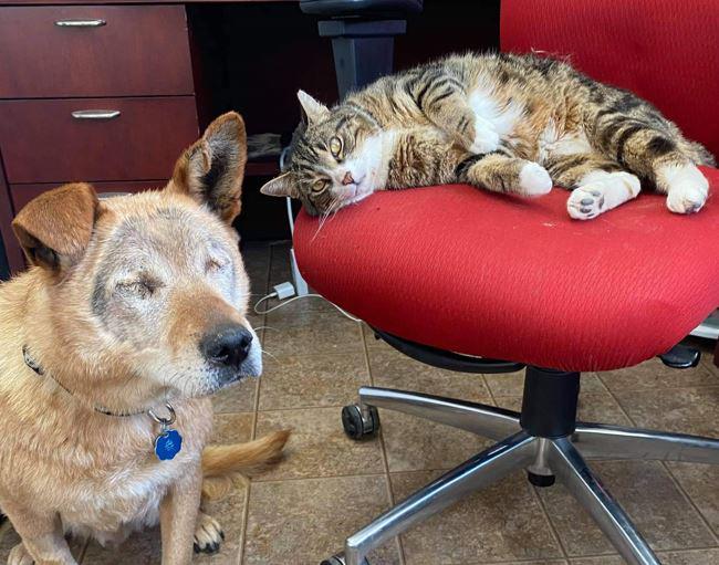 Cachorro cego e seu gato-guia foram adotados juntos após tornarem-se inseparáveis