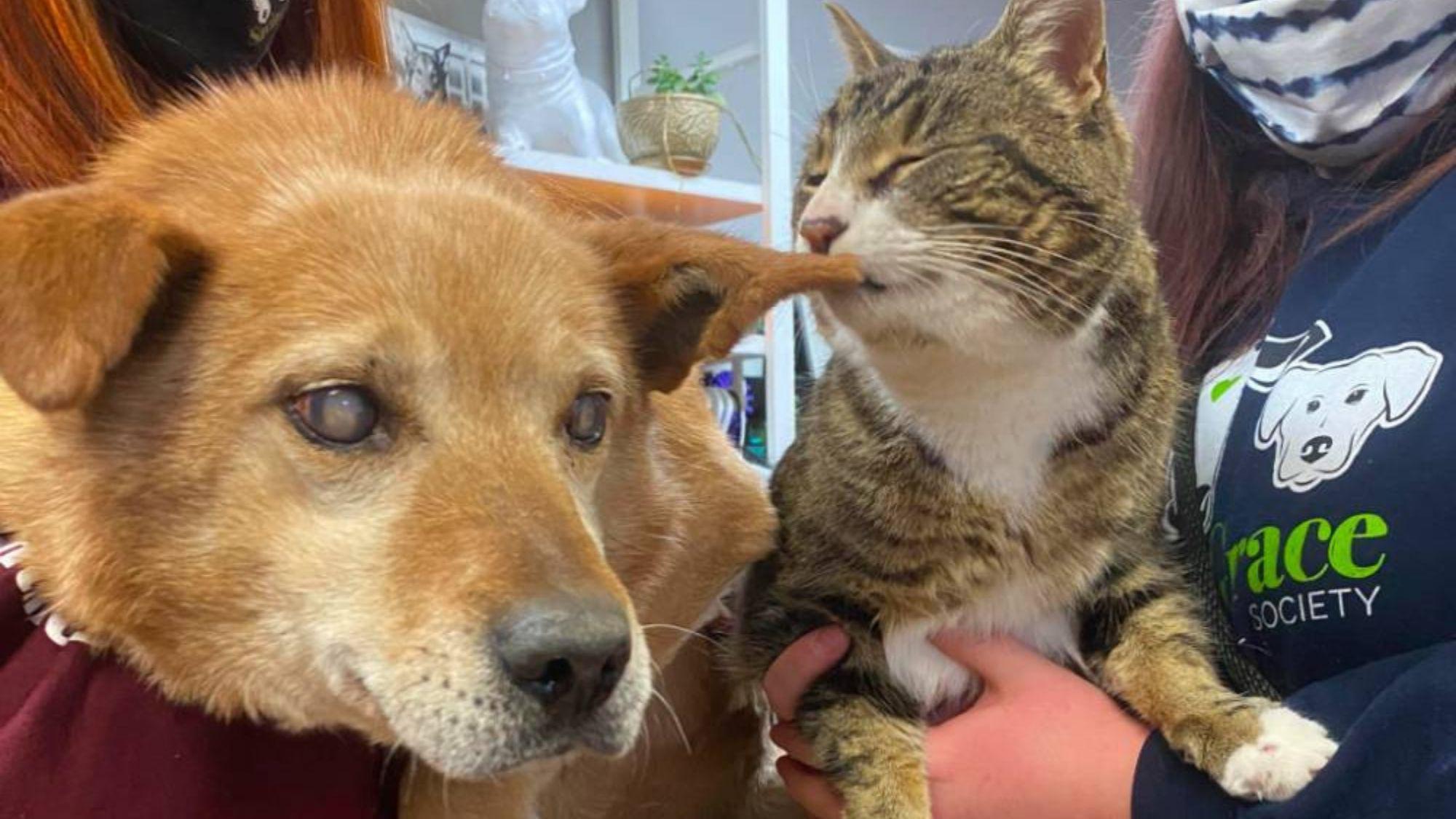 Cachorro cego e seu gato-guia