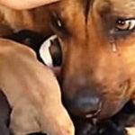 Cadela chora ao ser resgatada com seus filhotes