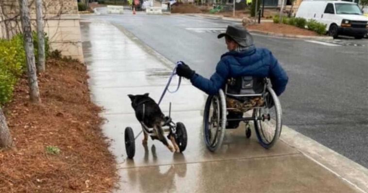 Homem cadeirante adota cachorro cadeirante que ninguém queria