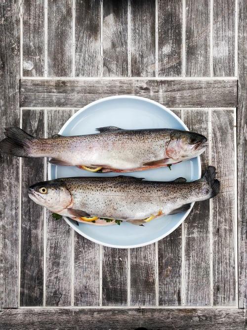 doença da urina preta peixes
